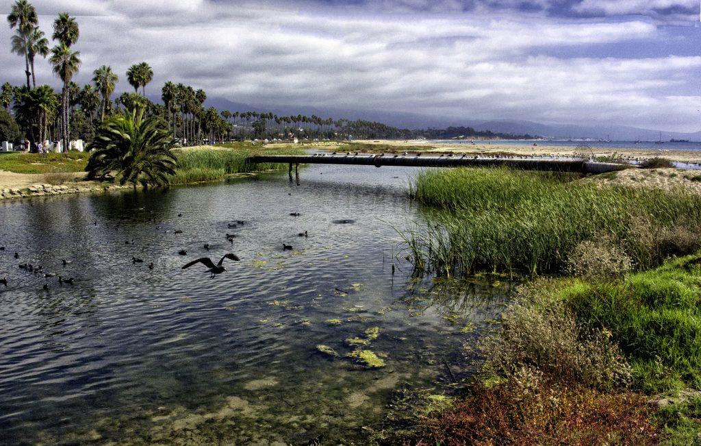 birds swim in coastal lagoon