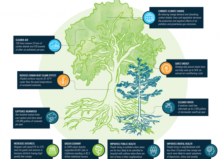 Graphic showing benefits of trees