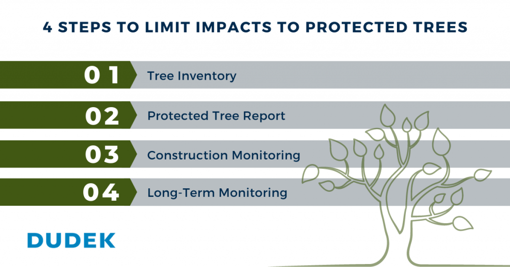 List of 4 steps to limited impacts to protected trees. 1. Tree Inventory. 2. Protected Tree Report. 3. Construction Monitoring. 4. Long-Term Monitoring.